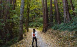 S_Aerer forêt