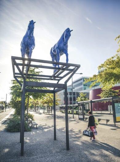 chevaux bleus_saintetiennemetropole_Pierre Grasset